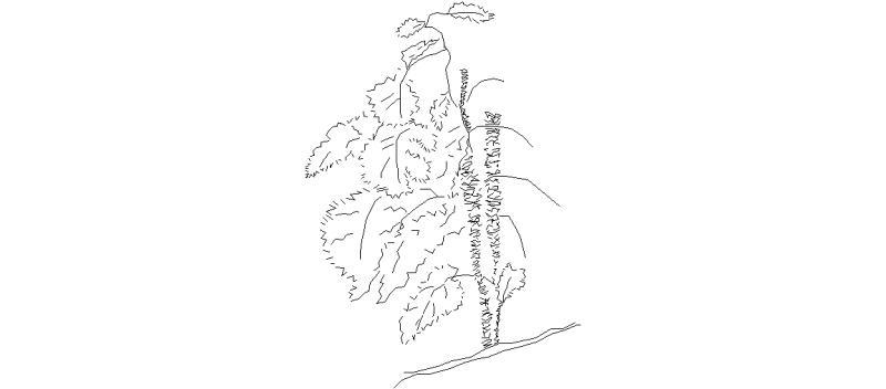 arbusto01.jpg
