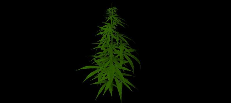 árbol en 3 dimensiones, vegetación 3d-06