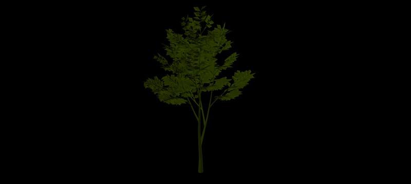 árbol en 3 dimensiones, vegetación 3d-09